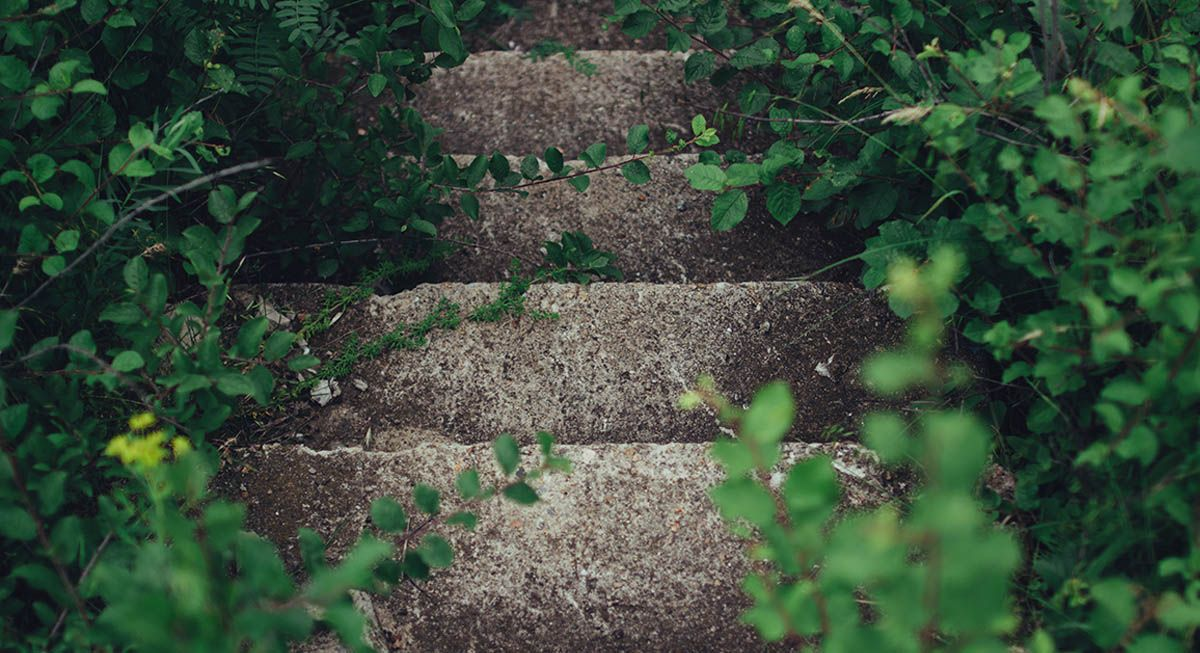 Staircase in the wild